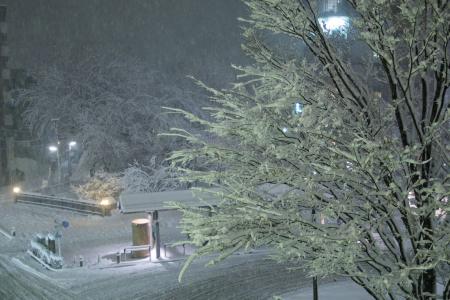Tokyo in Snow